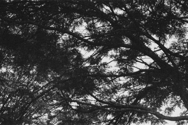 abstract in trees