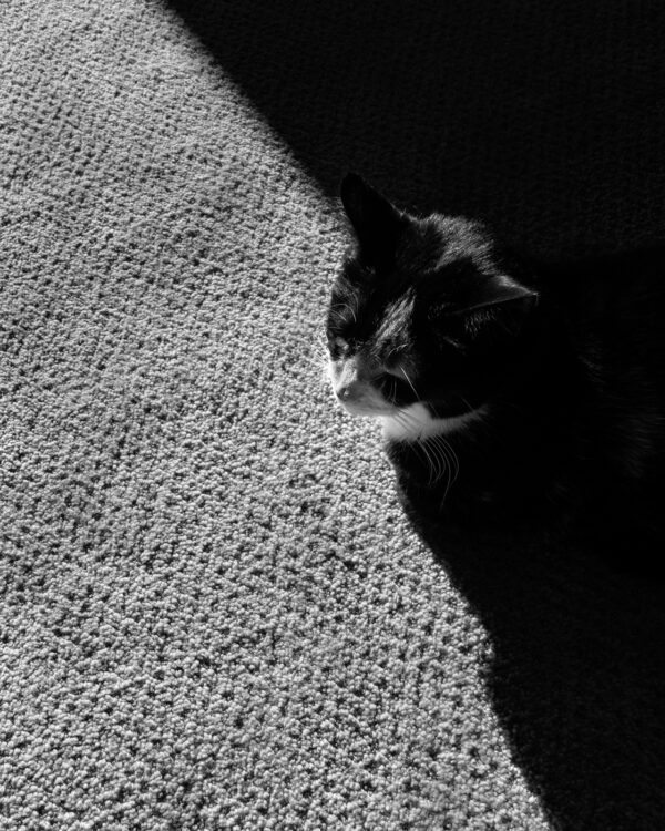 Photo of a cat in the shadow