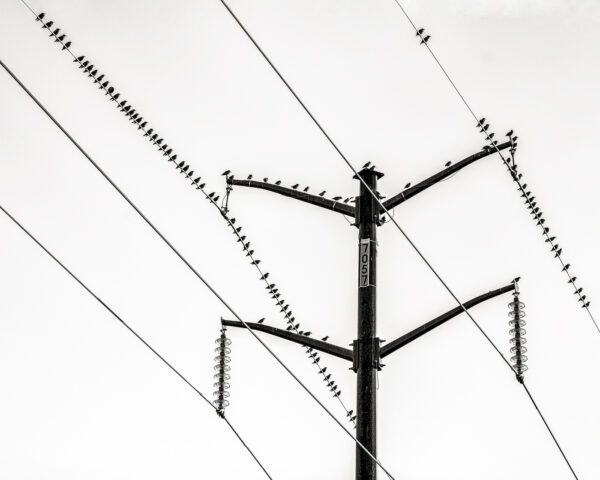 Photograph of birds on a wire