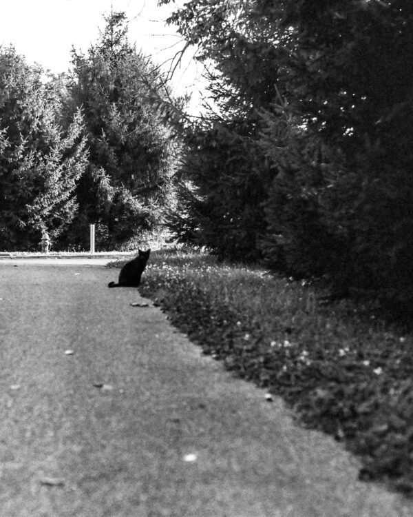 A photograph of a black cat on the path