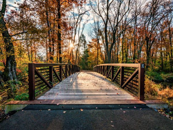 Photograph of the bridge at Chalfont Park under fall trees