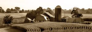 A sepia photograph of a cornfield and a barn.