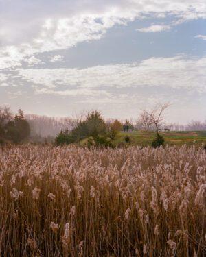 A photo of a field with a foggy treeline