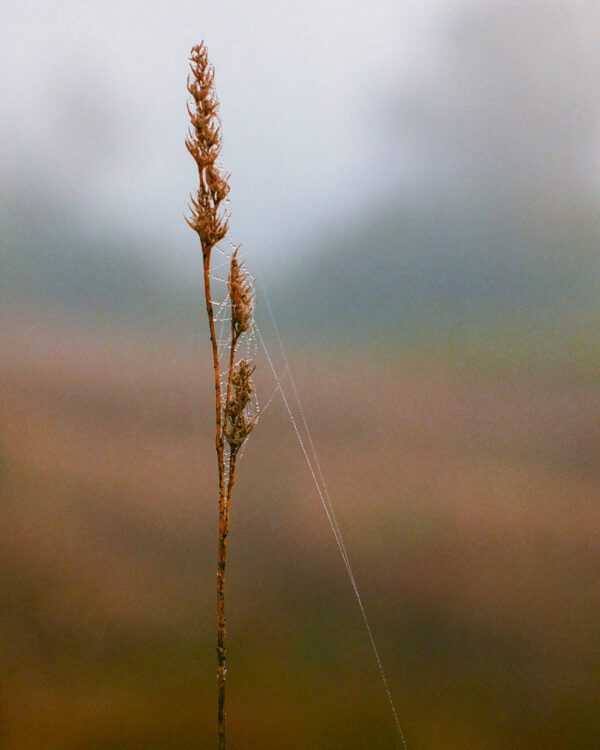 A film photograph of a dew web on a fall weed.