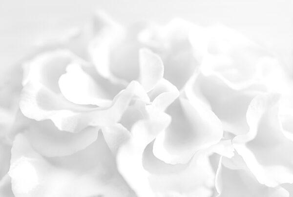 A close up photograph of a flower