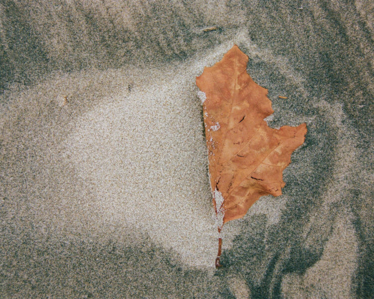 A colorful leaf in the sand