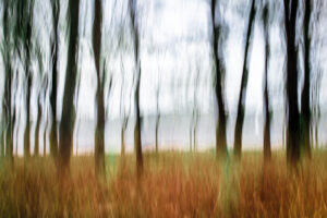 Abstract photography of trees
