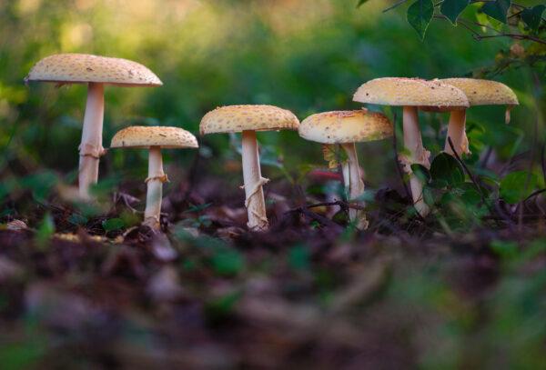 Macro photograph of wild mushrooms
