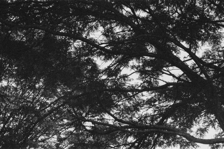 Abstraction in trees in Souderton, PA