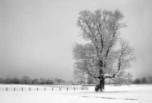 Photograph of a lonely tree on a snowy night