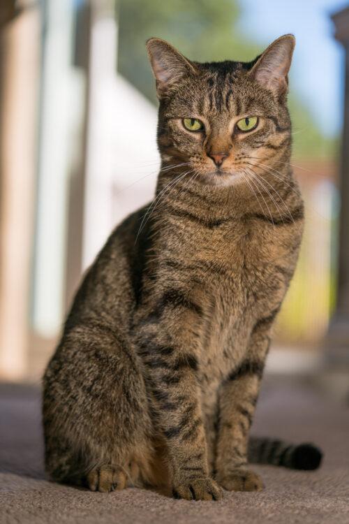 Cat sitting tall